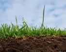 Найдены бактерии, превращающие загрязнение в урожай