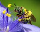 Неоникотиноидная война закончена победой пчел