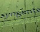 Syngenta запускает инновационный нематоцид