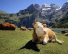Почему швейцарские фермеры отказались от пестицидов?
