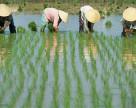 Современное состояние сельского хозяйства Китая и агрохимических предприятий
