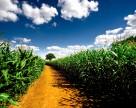 Monsanto больше не проводит работу по лоббированию ГМ продуктов в Европе