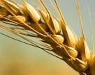 Синоптики обещают Украине высокий урожай