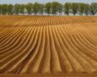 ГМО угрожают плодородию почв Украины
