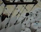 Мощность завода минудобрений в Приморье составит 5,1 млн тонн в год