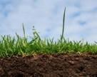 Биогумус для реанимации почвы
