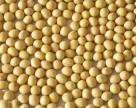 Дефицит сырья поднял цены на рынке соевых бобов