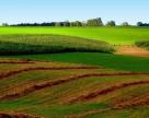 Присяжнюк предлагает привлекать инвесторов долгосрочной арендой сельхозземель