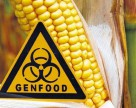Создана ГМ-кукуруза способная противостоять афлатоксину