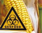 В США разрешили выращивать кукурузу, которая сама убивает вредителей