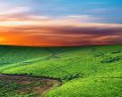 Регистрацию права аренды сельхозземель упростят?