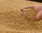Україна експортувала 11,7 млн тонн зернових