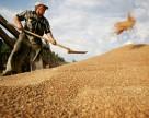 На рынке украинского зерна отмечается стабильность