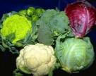 Украинские фермеры отказываются от выращивания капусты