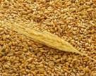 На экспортном рынке Украины все еще дефицит предложения зерна