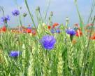 Агрохолдинг HarvEast уменьшил земельный банк на 10 тыс. га