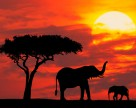 Кенийский дебют в семенном производстве