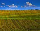 Обзор украинского рынка земель сельскохозяйственного назначения за III квартал 2013 года