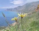 В Крыму возможен высокий урожай озимой пшеницы 2014