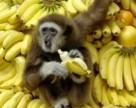 Бананы догоняют украинские яблоки по потреблению
