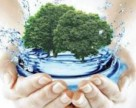 Проведена экологическая акция «2000 деревьев «ФосАгро»