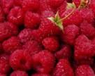 Треть продовольственных продуктов содержат повышенную концентрацию пестицидов