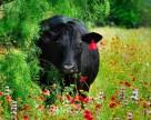 Животноводство в Укрине под угрозой вымирания