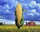 Ставка на кукурузу в Украине не сработала