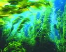 Водоросли для защиты растений