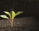 Андрей Дикун: совершенствование законодательства в сфере защиты растений должно быть решено в ближайшее время