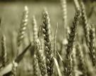 Политические проблемы в Украине подняли мировые цены на зерно