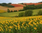 Самые ожидаемые новинки законодательства по землям сельхозназначения