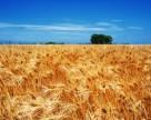Сколько земли дать агрохолдингам решат