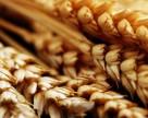 Аграрии стали больше продавать пшеницы