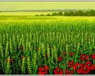 Как оценить земельные активы сельскохозяйственного назначения
