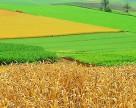 Краткосрочная аренда земель в Украине приводит к истощению почв