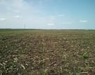 Культивация полей не решает проблемы с сорняками