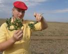 Инструкция к  гербицидному «вундерваффе» для рядового пользователя