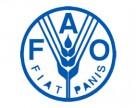 ФАО випускає посібник по боротьбі із іржею пшениці
