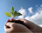 РФ и ОАЭ сотрудничают в сфере карантина и защиты растений