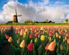 Нидерланды расширили применения гербицидов