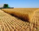 Украина намолотила  первые 308 тыс. тонн зерна