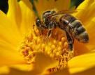 Пестициды угрожают продовольственной безопасности США