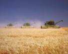 Сколько зерна собрали на Донбассе?