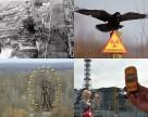 В зоне отчуждения создадут Чернобыльский биосферный заповедник