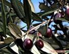 Испания использует искусственный интеллект для защиты растений