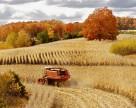 В Украине к 18 сентября намолочено более 38,5 млн. тонн зерна