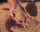 Украинские мукомолы недовольны качеством зерновых