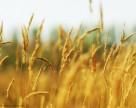 Использование гербицидов и трансгенных культур снижает выбросы углекислого газа