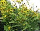 Гербициды будут делать из сорняков